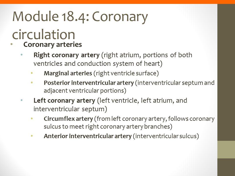 Module 18.4: Coronary circulation