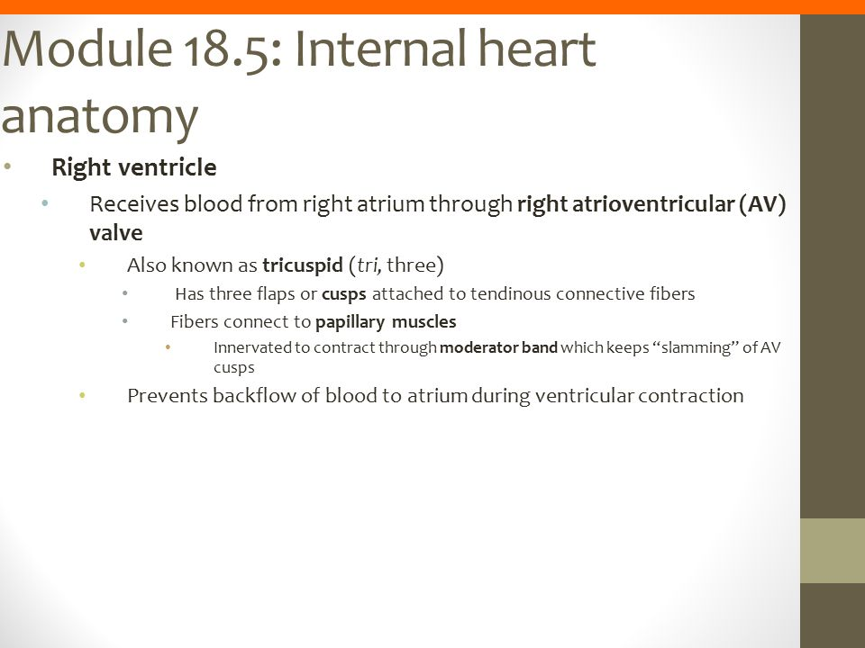 Module 18.5: Internal heart anatomy