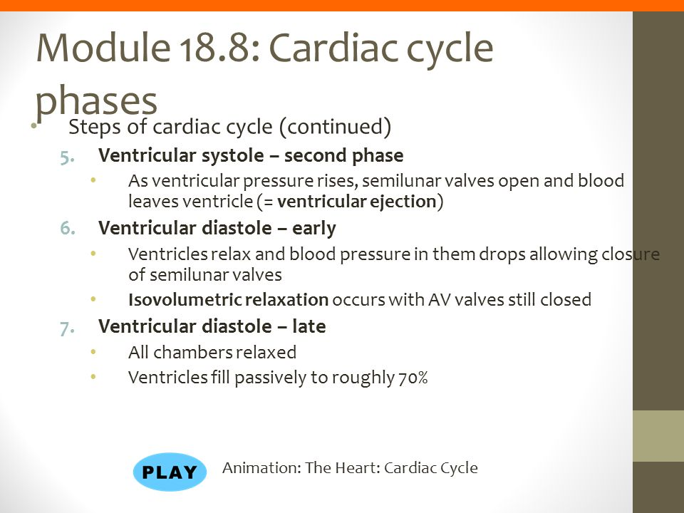 Module 18.8: Cardiac cycle phases