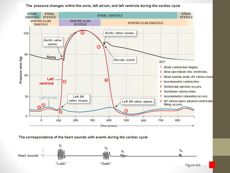 The pressure changes within the aorta, left atrium, and left ventricle during the cardiac cycle