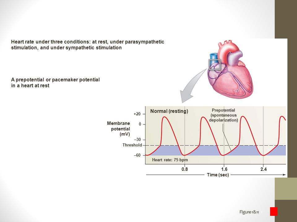 Heart rate under three conditions: at rest, under parasympathetic