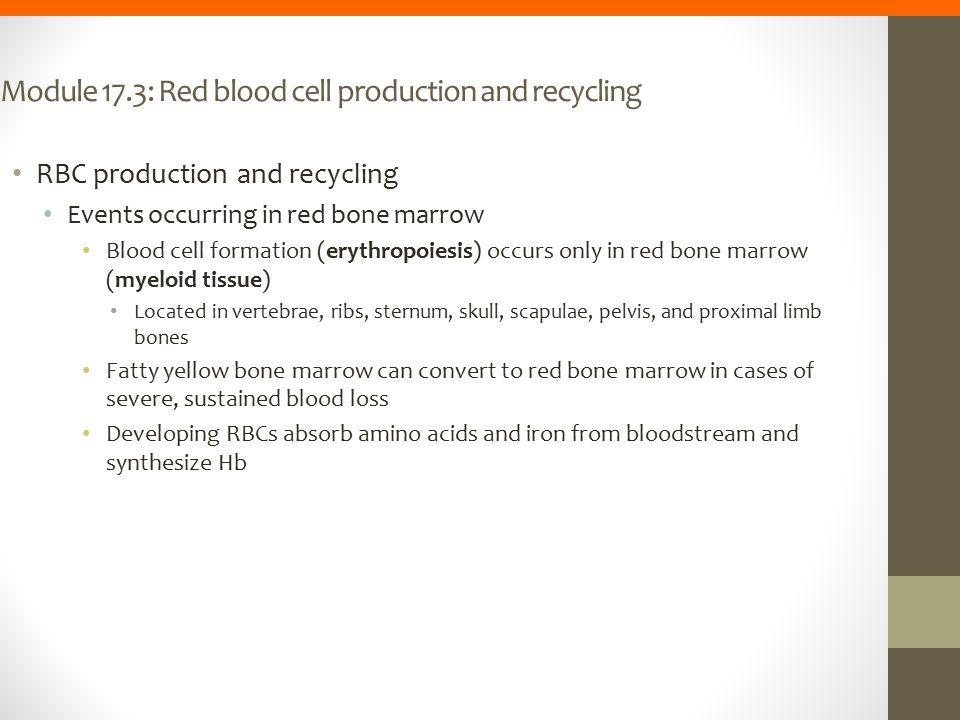 Module 17.3: Red blood cell production and recycling