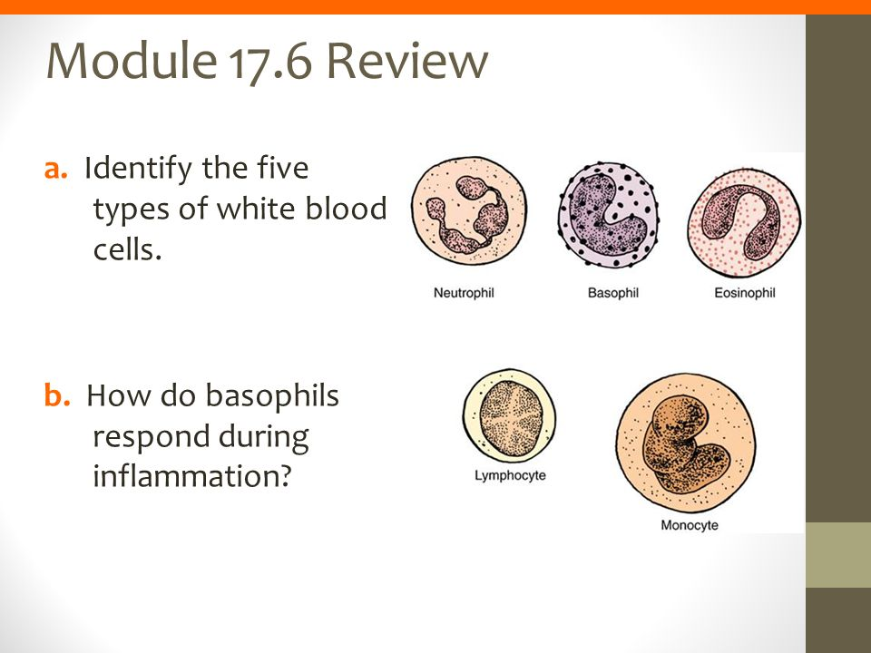 Module 17.6 Review a. Identify the five types of white blood cells.