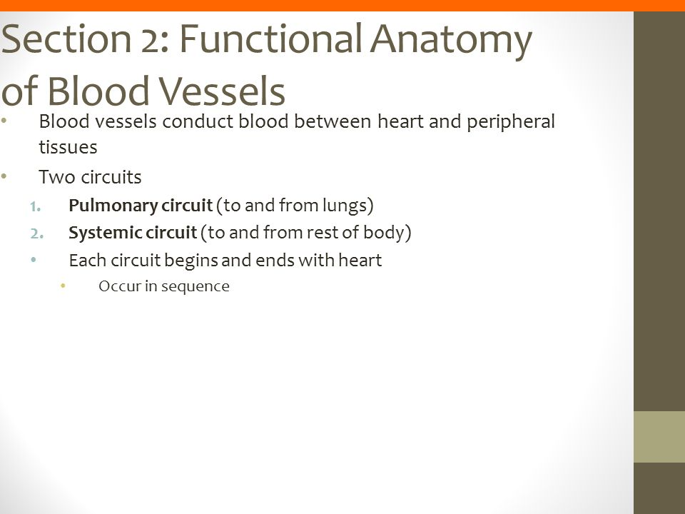 Section 2: Functional Anatomy of Blood Vessels
