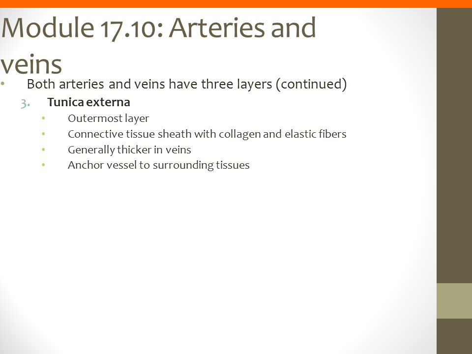 Module 17.10: Arteries and veins
