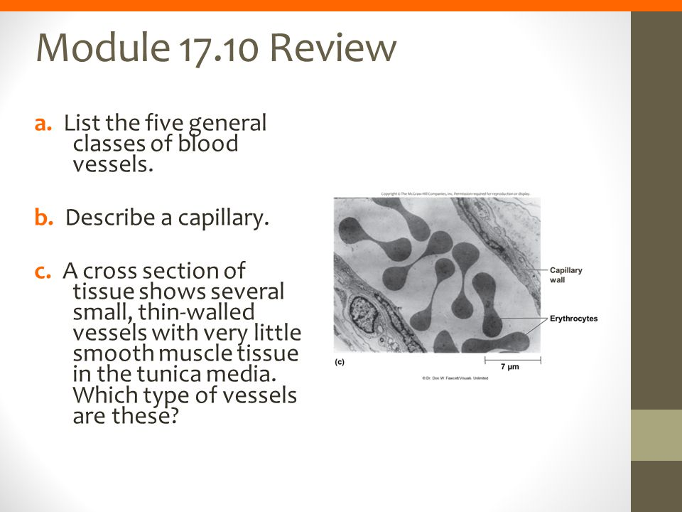 Module 17.10 Review a. List the five general classes of blood vessels.