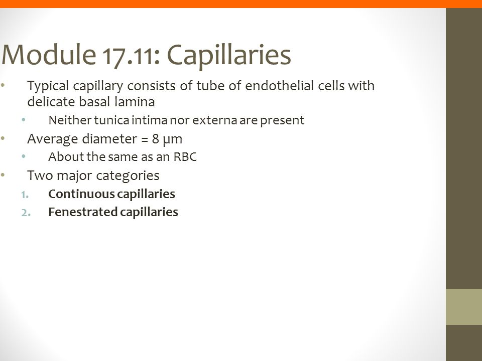 Module 17.11: Capillaries Typical capillary consists of tube of endothelial cells with delicate basal lamina.