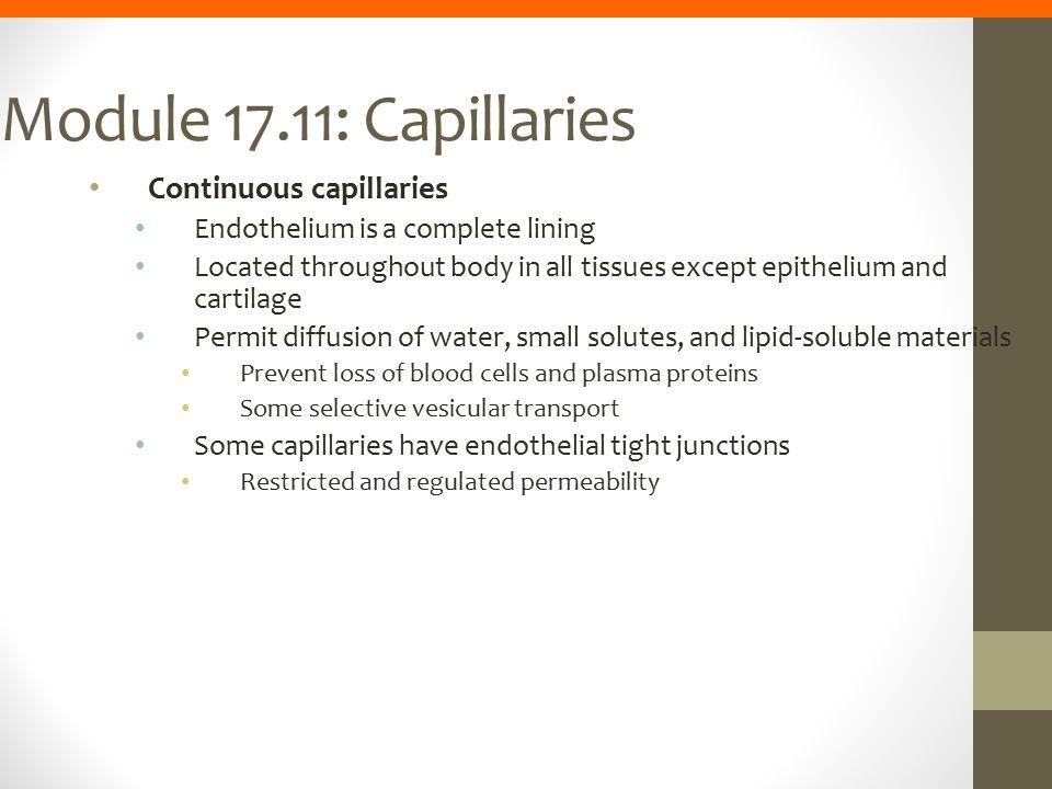 Module 17.11: Capillaries Continuous capillaries