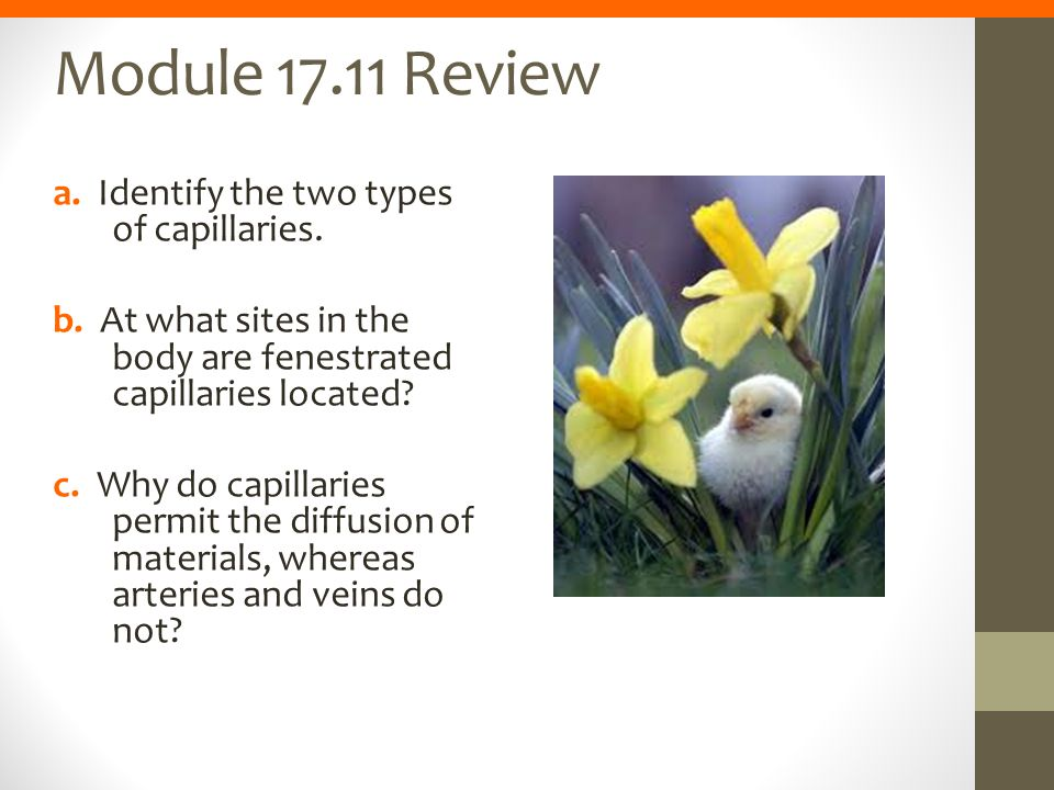 Module 17.11 Review a. Identify the two types of capillaries.