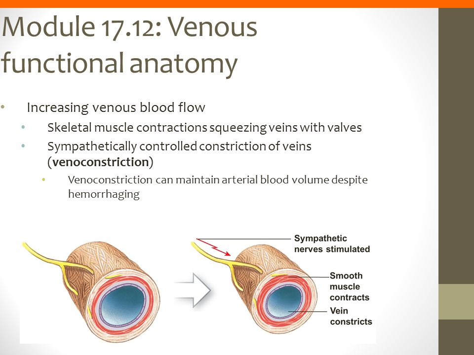 Module 17.12: Venous functional anatomy