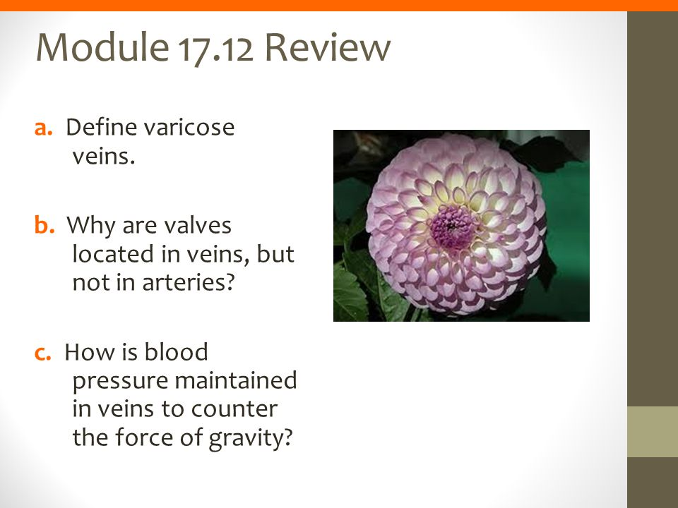 Module 17.12 Review a. Define varicose veins.