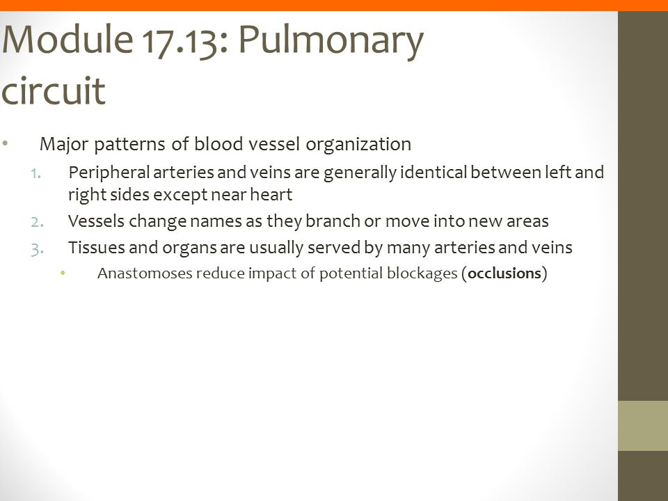 Module 17.13: Pulmonary circuit