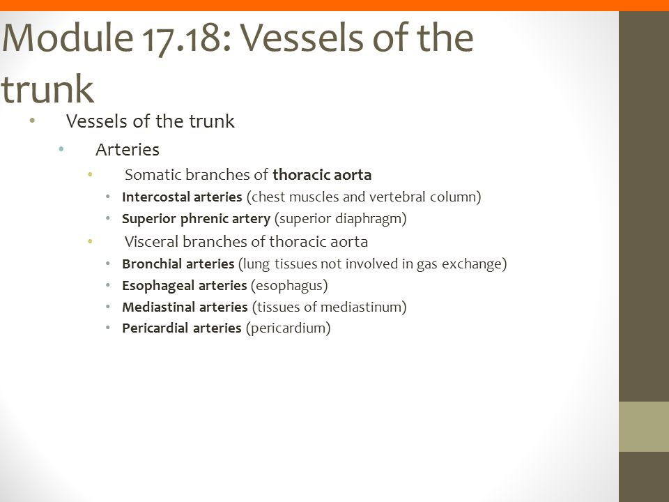 Module 17.18: Vessels of the trunk
