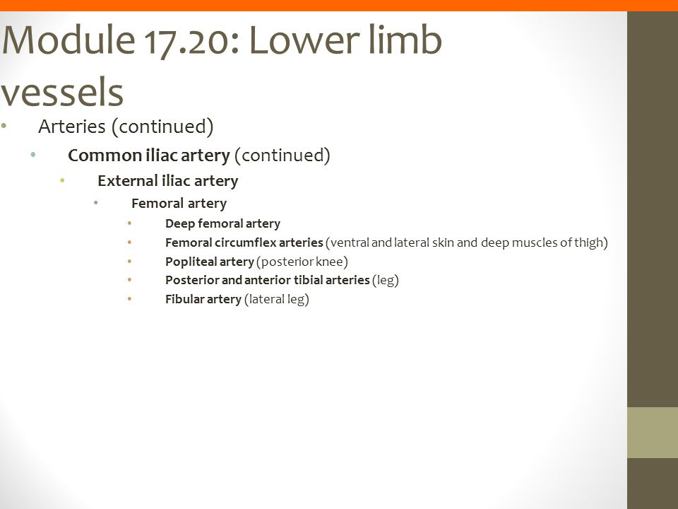 Module 17.20: Lower limb vessels