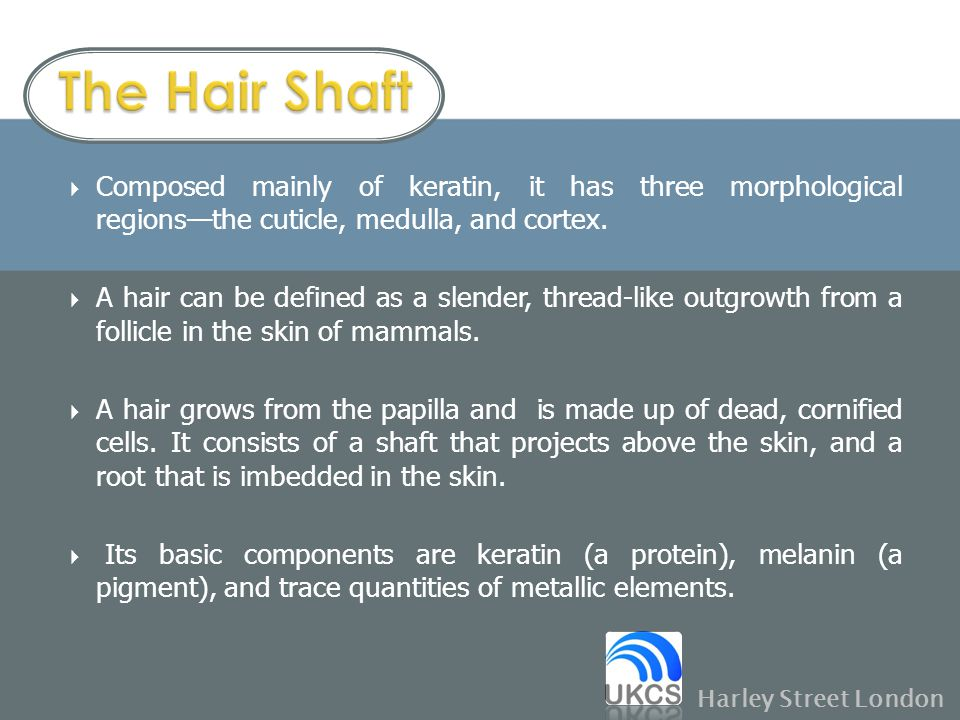 The Hair Shaft Composed mainly of keratin, it has three morphological regions—the cuticle, medulla, and cortex.