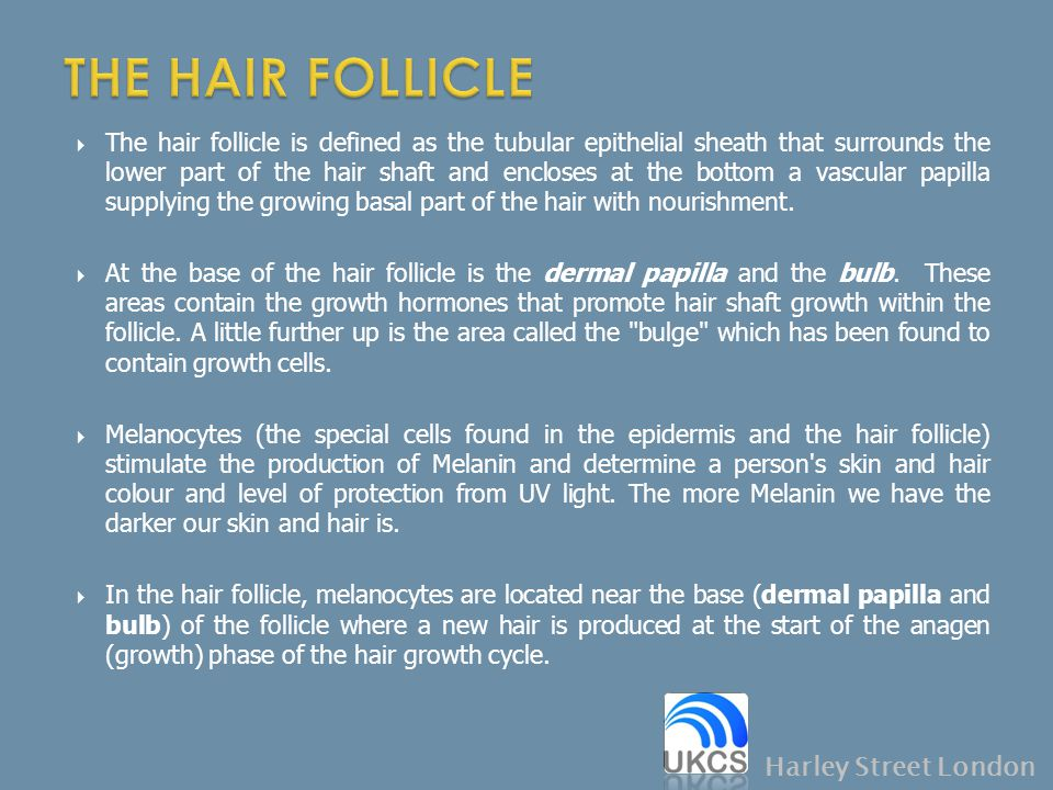 THE HAIR FOLLICLE Harley Street London