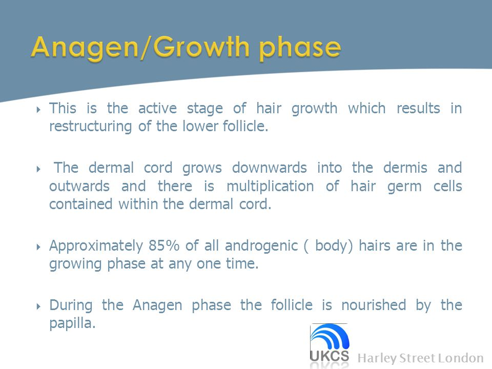 Anagen/Growth phase This is the active stage of hair growth which results in restructuring of the lower follicle.