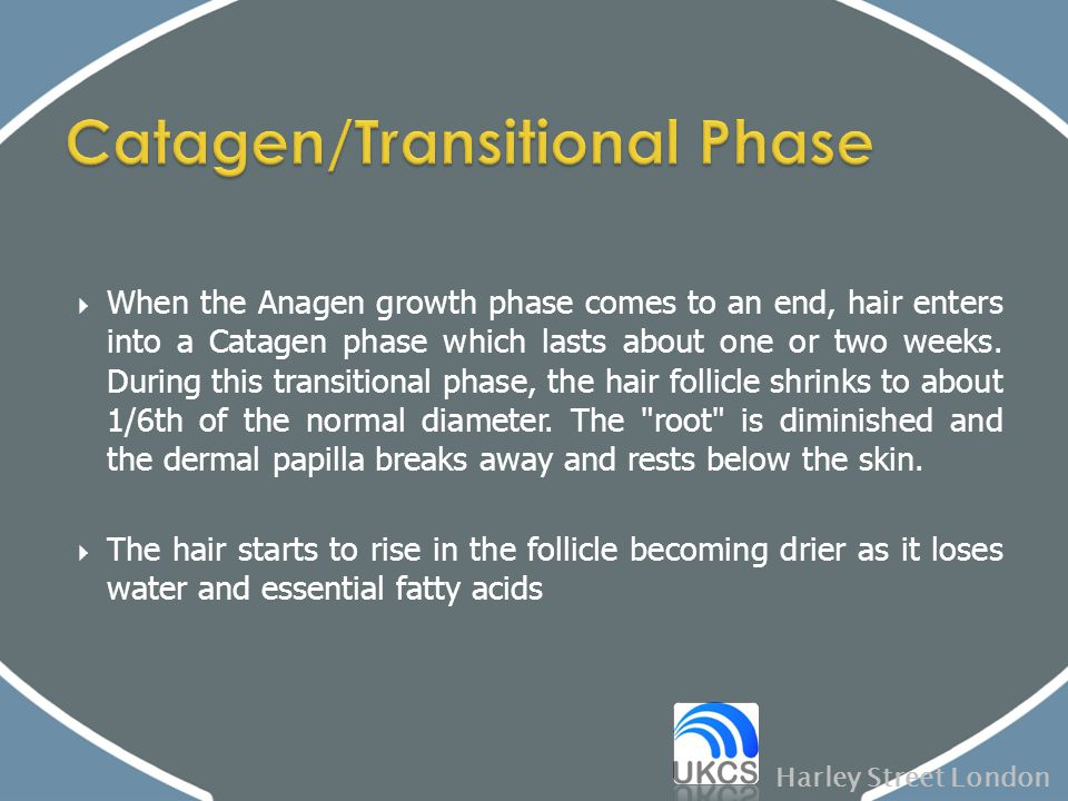Catagen/Transitional Phase