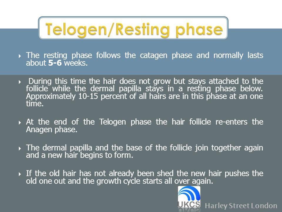 Telogen/Resting phase