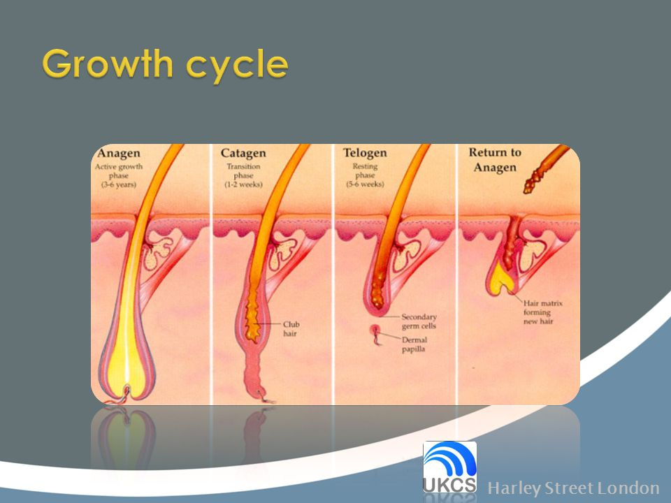 Growth cycle Harley Street London