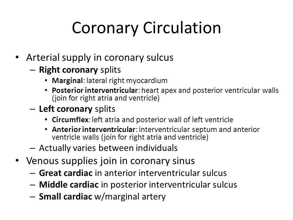 Coronary Circulation Arterial supply in coronary sulcus