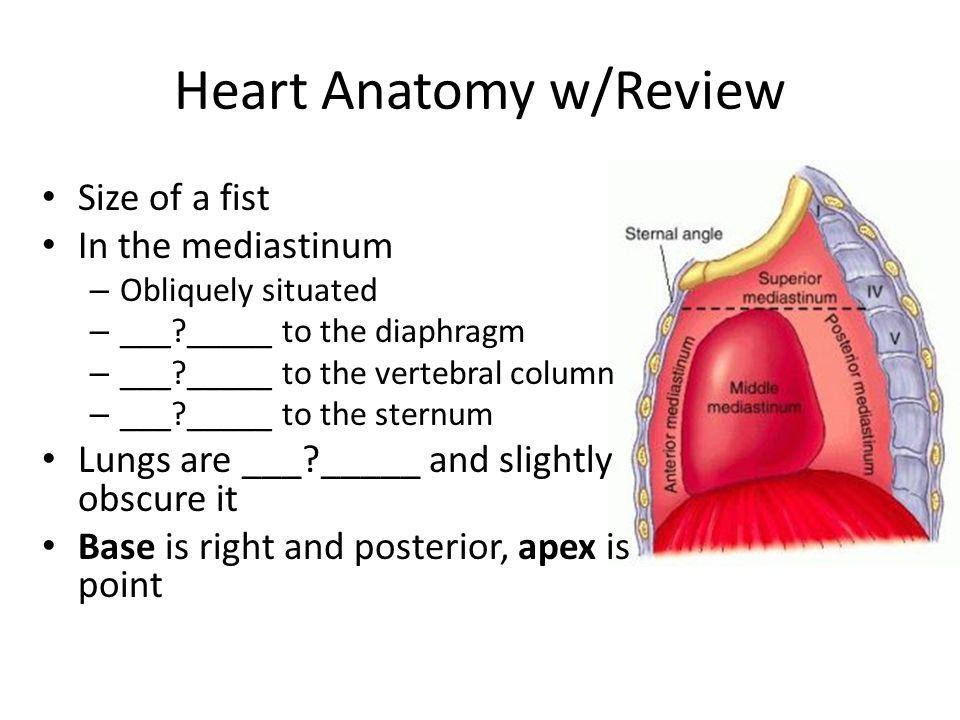 Heart Anatomy w/Review