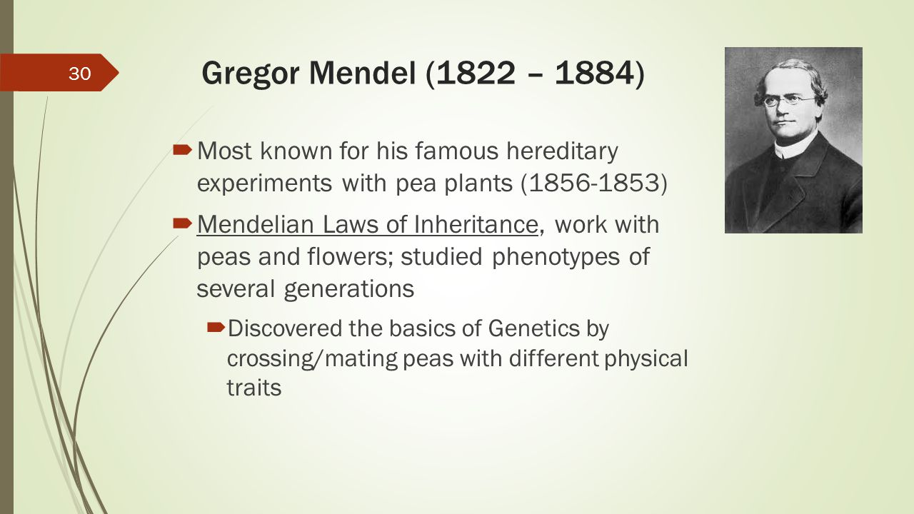 Gregor Mendel (1822 – 1884) Most known for his famous hereditary experiments with pea plants (1856-1853)
