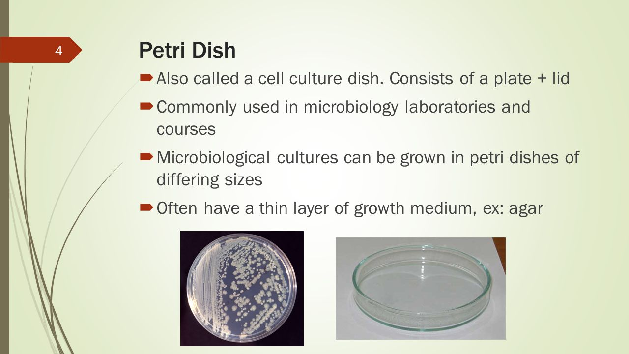 Petri Dish Also called a cell culture dish. Consists of a plate + lid