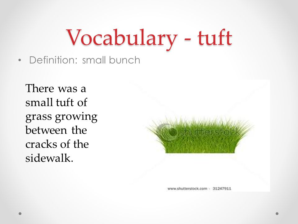 Vocabulary - tuft Definition: small bunch.