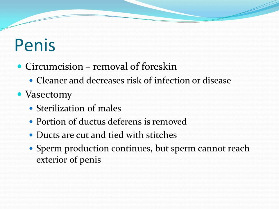 Penis Circumcision – removal of foreskin Vasectomy