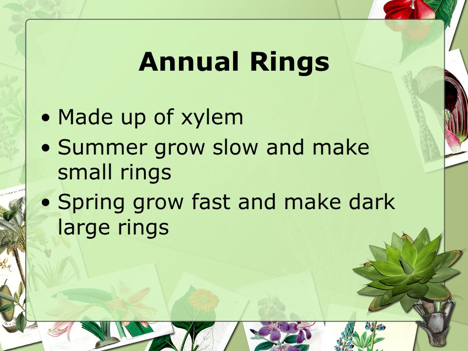 Annual Rings Made up of xylem Summer grow slow and make small rings