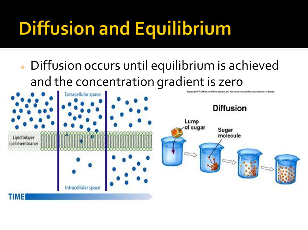 Diffusion and Equilibrium