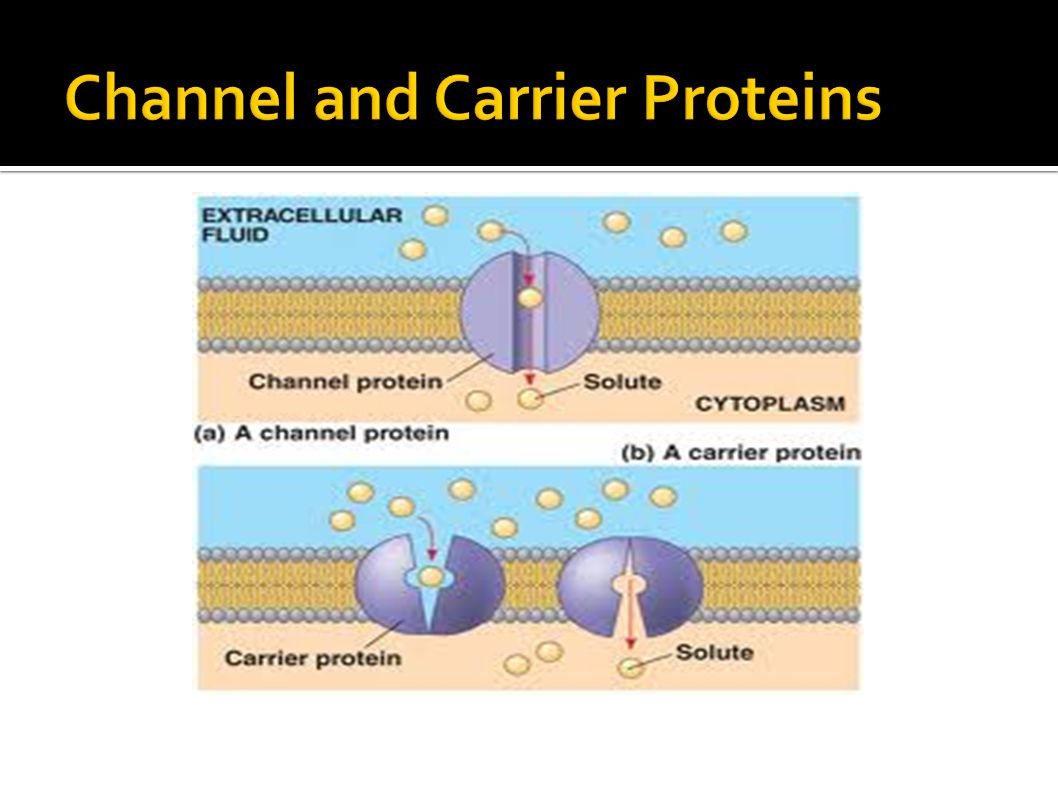 Channel and Carrier Proteins