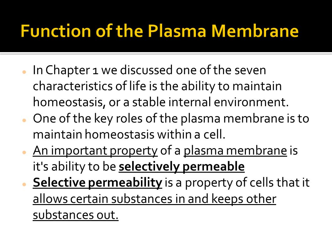 Function of the Plasma Membrane
