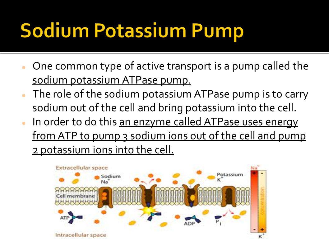 Sodium Potassium Pump One common type of active transport is a pump called the sodium potassium ATPase pump.