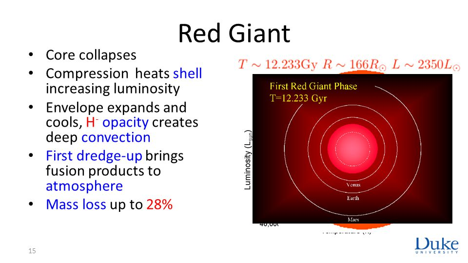 Red Giant Core collapses Compression heats shell increasing luminosity