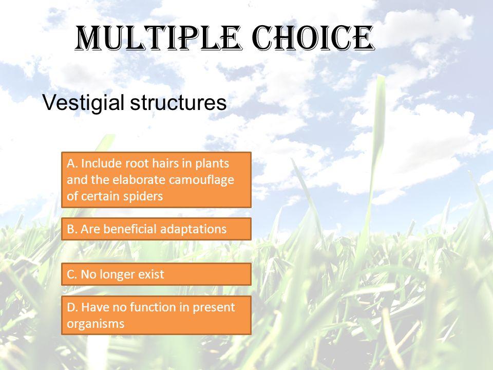 Multiple Choice Vestigial structures