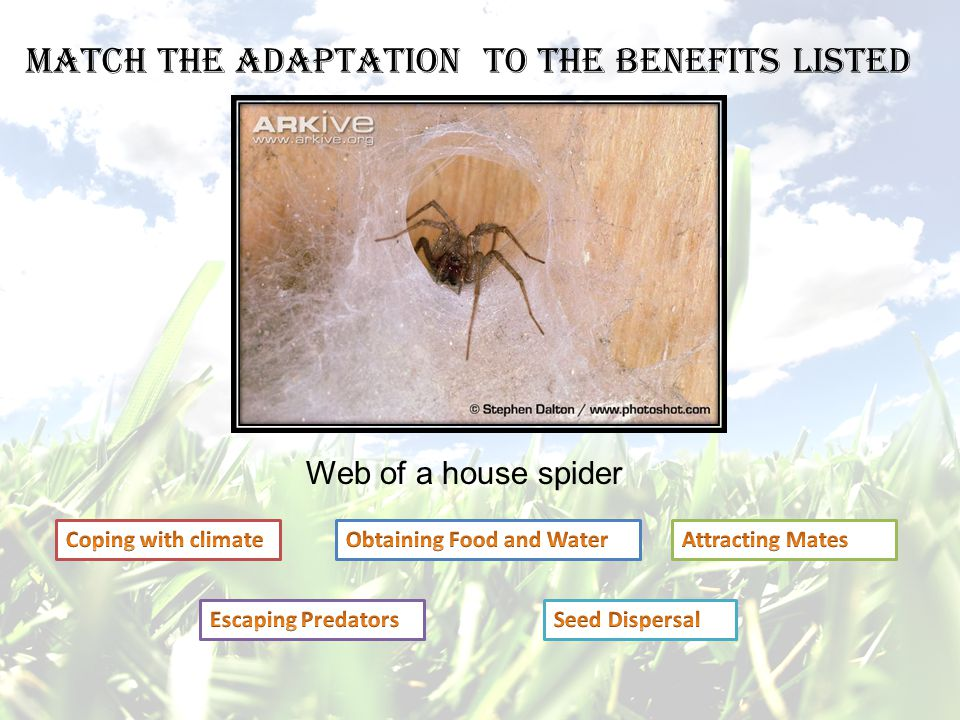 Match the adaptation to the benefits listed