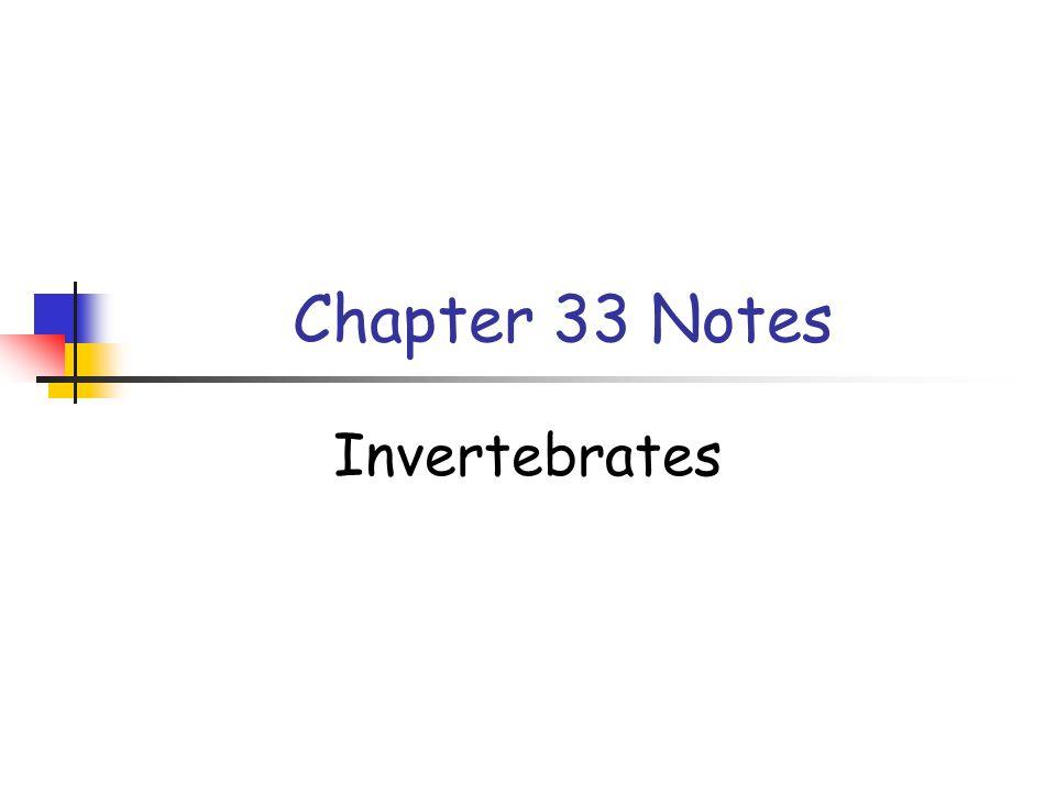 Chapter 33 Notes Invertebrates