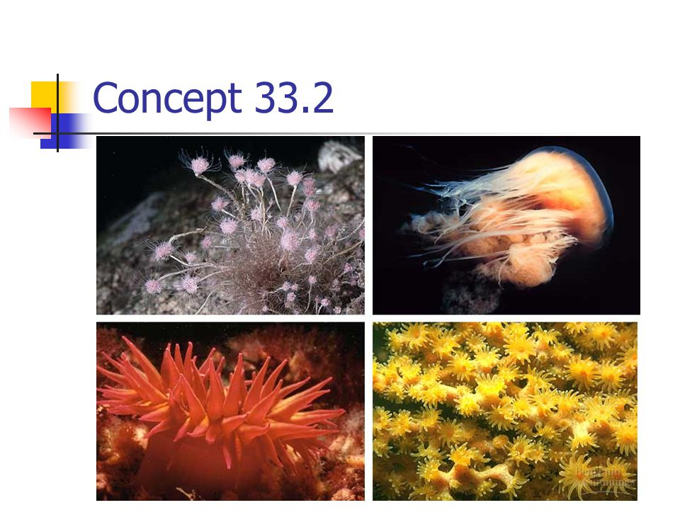 Concept 33.2