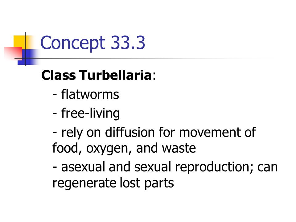 Concept 33.3 Class Turbellaria: - flatworms - free-living