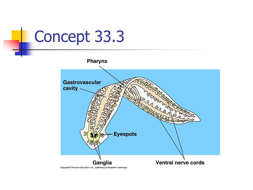 Concept 33.3