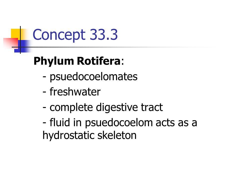 Concept 33.3 Phylum Rotifera: - psuedocoelomates - freshwater