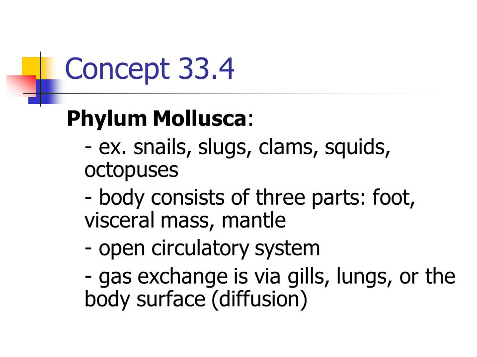 Concept 33.4 Phylum Mollusca: