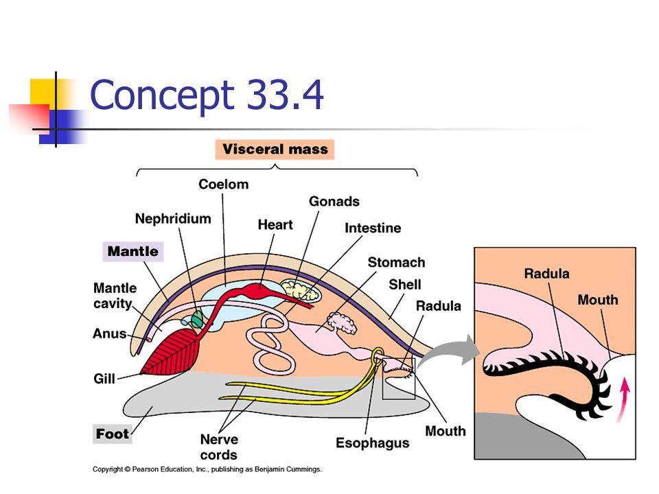 Concept 33.4