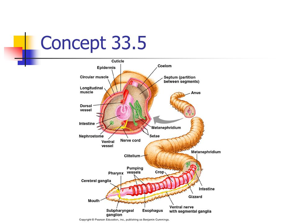 Concept 33.5