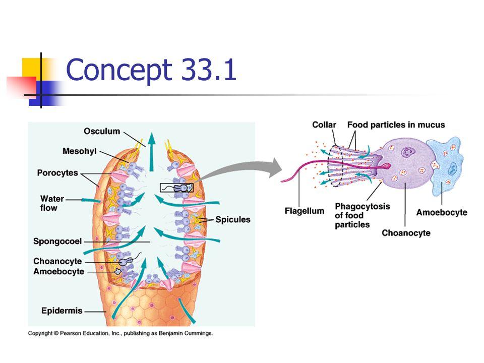 Concept 33.1