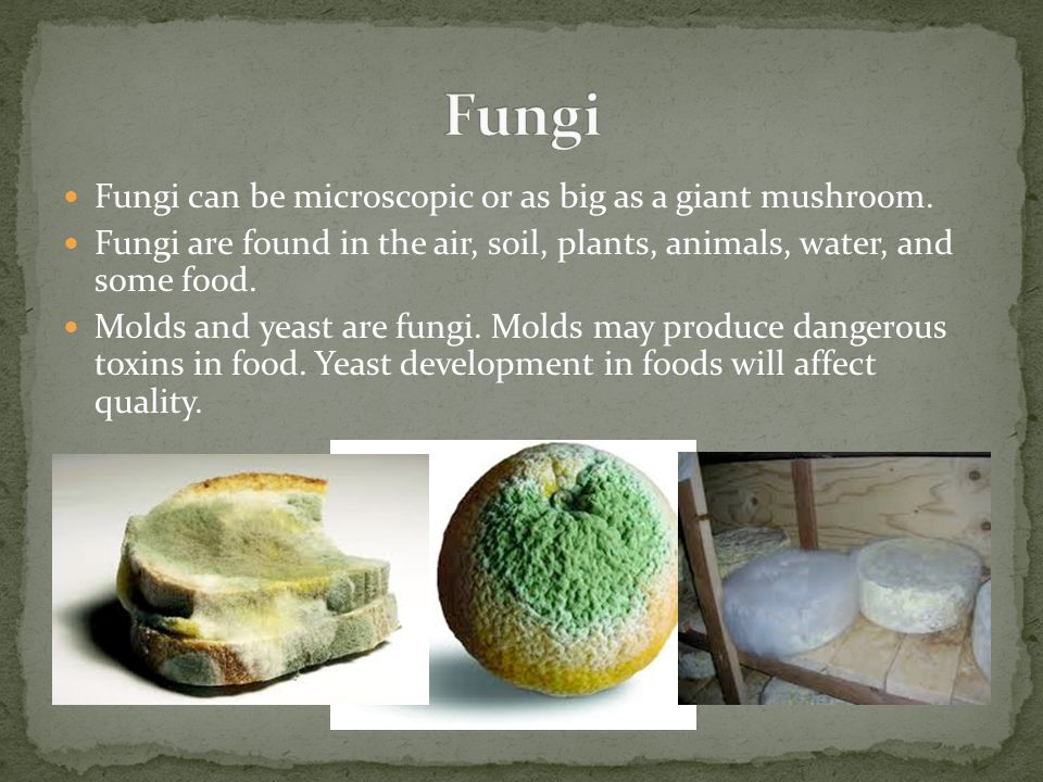 Fungi Fungi can be microscopic or as big as a giant mushroom.