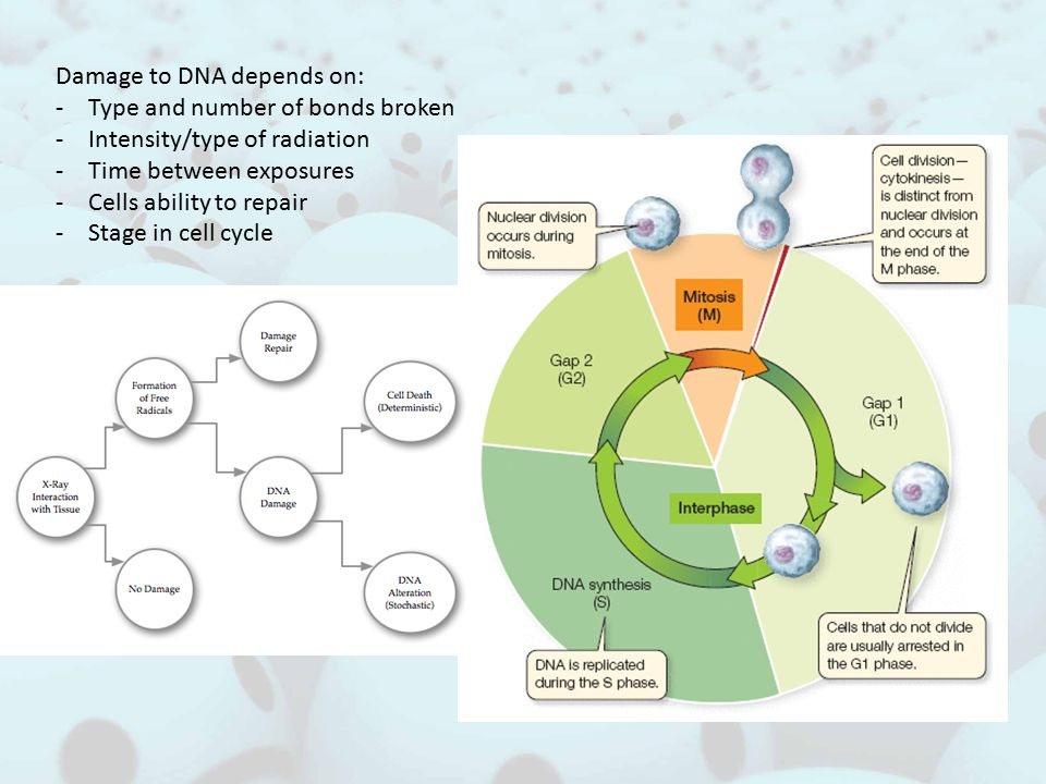 Damage to DNA depends on: