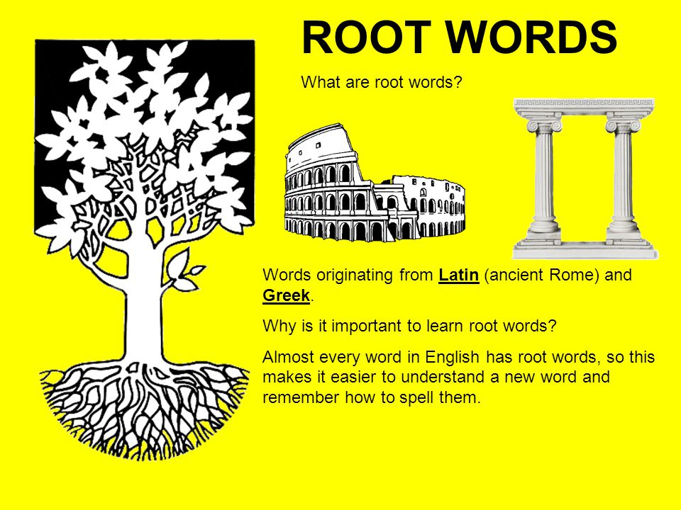 ROOT WORDS What are root words